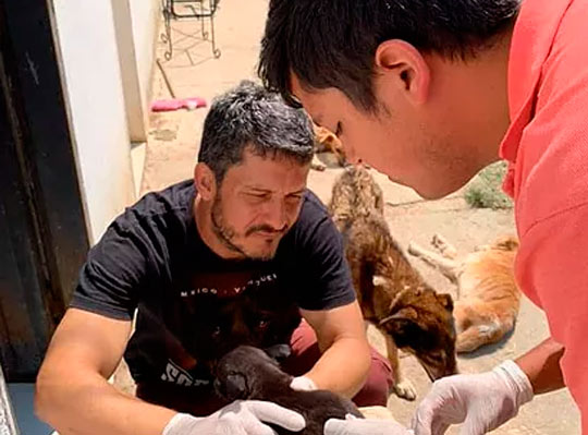 """""""Traslado mascotas a varios países para mantener mi fundación canina en Venezuela"""""""